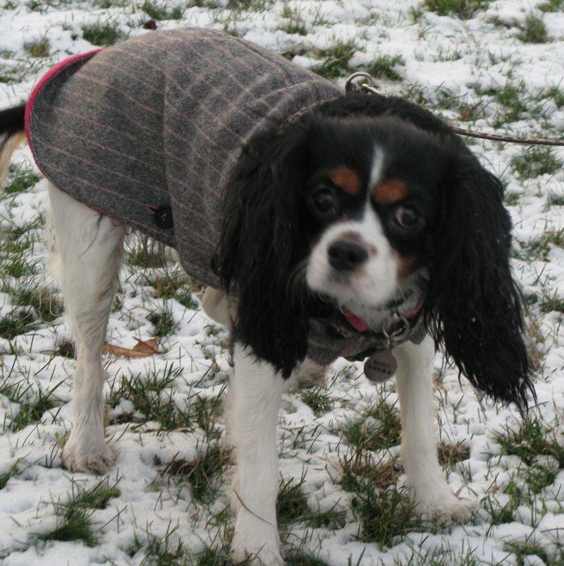 Boubou n a pas froid en Manteau Ines de la Fressange